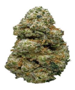 ACDC STRAIN FOR SALE